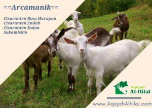 jasa layanan paket kambing aqiqah arcamanik
