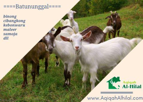 layanan jasa paket kambing aqiqah